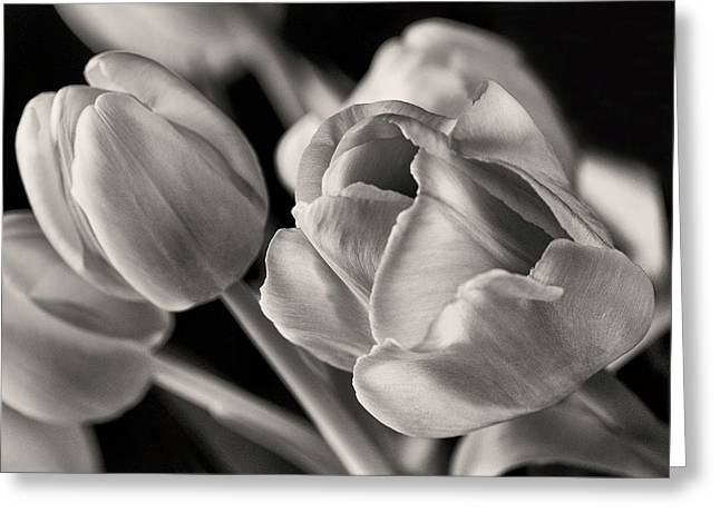 Petal Essence Greeting Card by Don Spenner