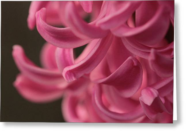 Greeting Card featuring the photograph Petal Pointing  by Connie Handscomb