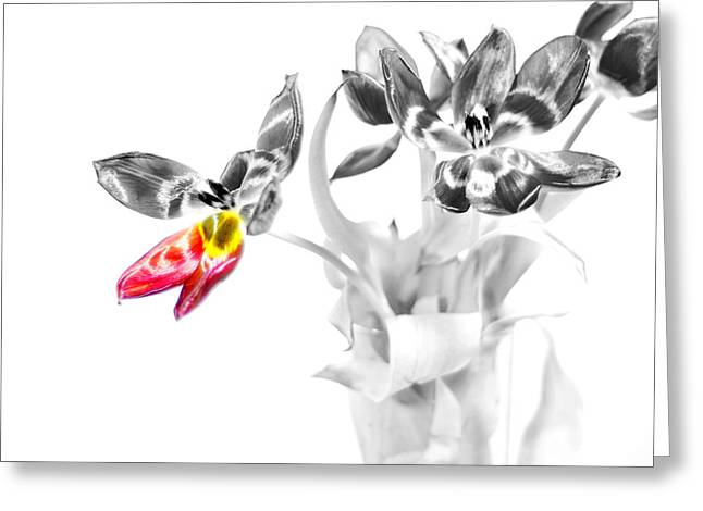 Petal Wings Fly Greeting Card