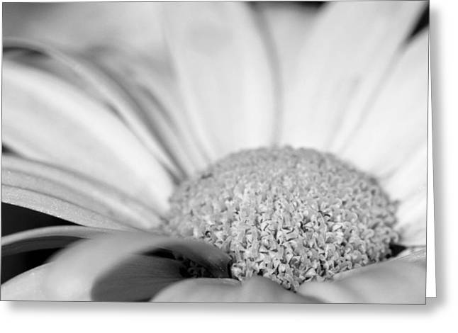 Greeting Card featuring the photograph Petals - Black And White by Angela Rath