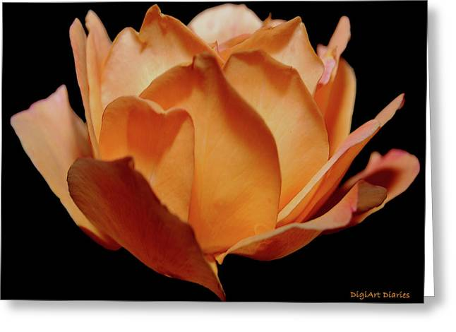 Petals Of Orange Sorbet Greeting Card