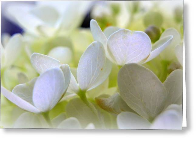 Petals Of White Greeting Card by Lisa Wooten