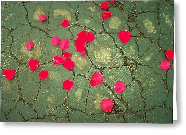Petals On Asphalt Greeting Card by Anna Villarreal Garbis