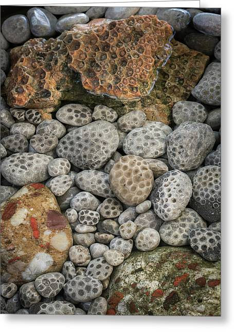 Petoskey And Pudding Stones Greeting Card
