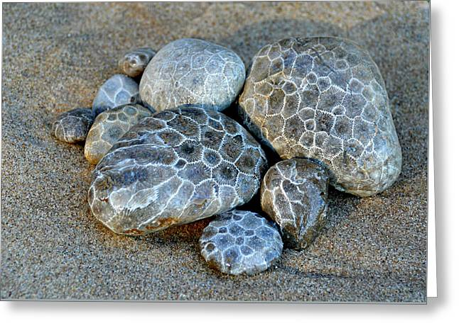 Greeting Card featuring the photograph Petoskey Stones by SimplyCMB
