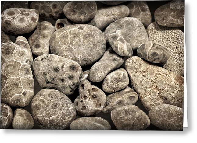 Petoskey Stones Vl Greeting Card