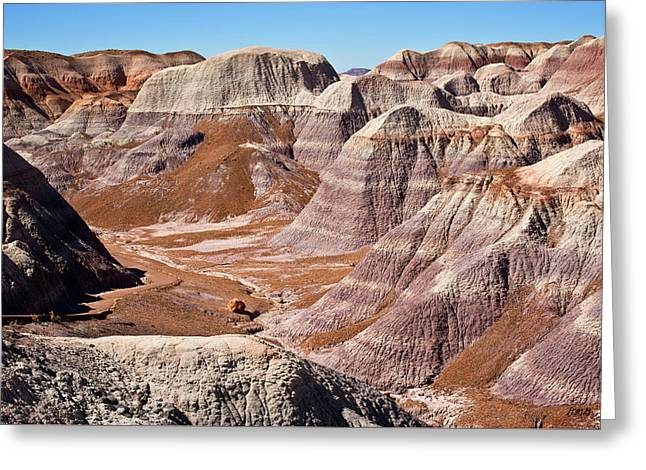 Petrified Forest I Greeting Card