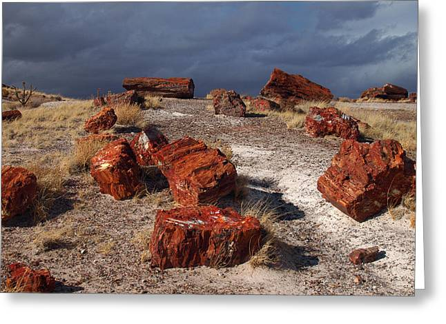 Greeting Card featuring the photograph Petrified Forest National Park by James Peterson