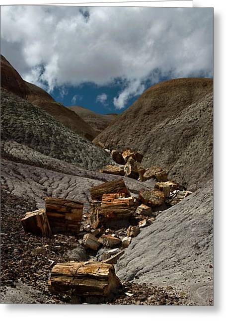Petrified Forest Arizona Greeting Cards - Petrified River Greeting Card by Murray Bloom