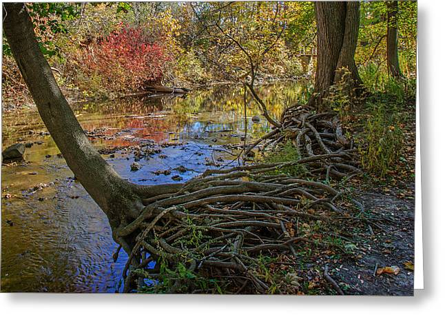 Petrifying Springs Park - Autumn  2 Greeting Card by Susan McMenamin
