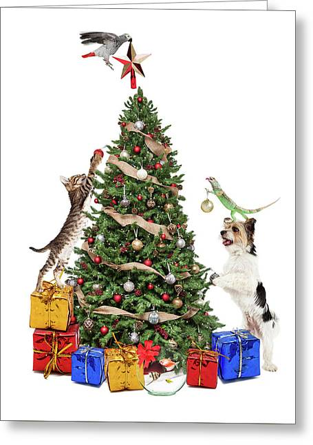 Pets Decorating Christmas Tree Greeting Card by Susan Schmitz