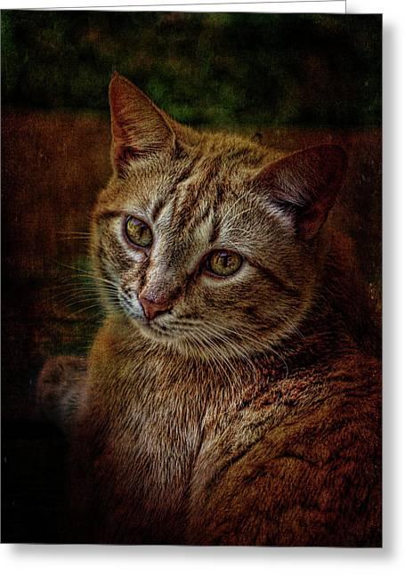 Pets Fat Cat Portrait 2 Greeting Card