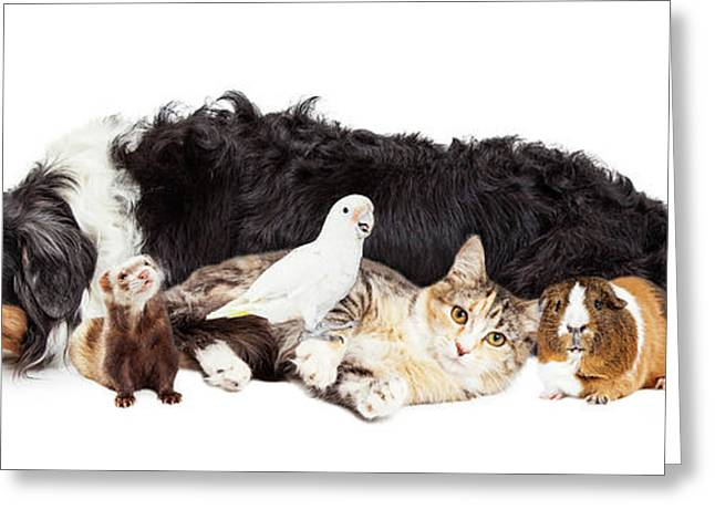 Pets Together On White Banner Greeting Card by Susan Schmitz