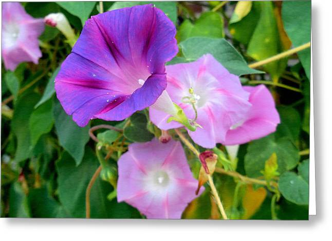 Petunia Blossom 8 Greeting Card by Lanjee Chee