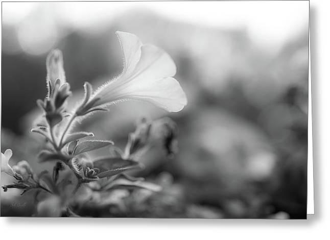 Petunia Impressions Greeting Card by Bob Orsillo