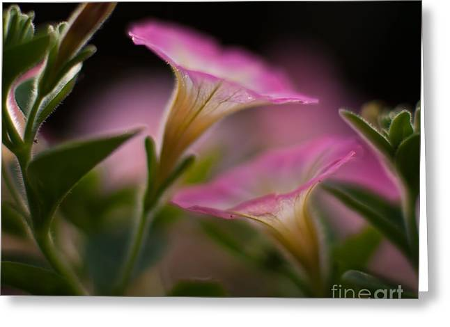 Petunia Joining Greeting Card by Mike Reid