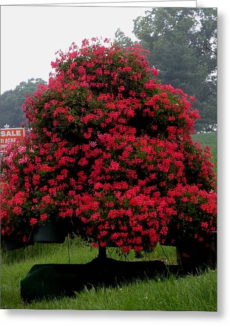 Greeting Card featuring the photograph Petunia Tree by Jeanette Oberholtzer
