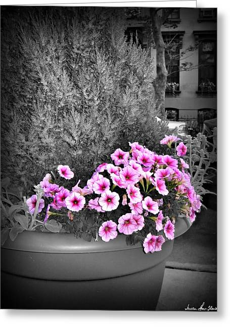 Greeting Card featuring the photograph Petunias In Brooklyn Circa 2006 by Iowan Stone-Flowers
