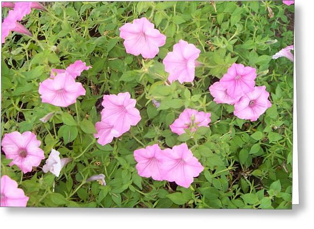 Petunias Greeting Card by Rosanne Bartlett