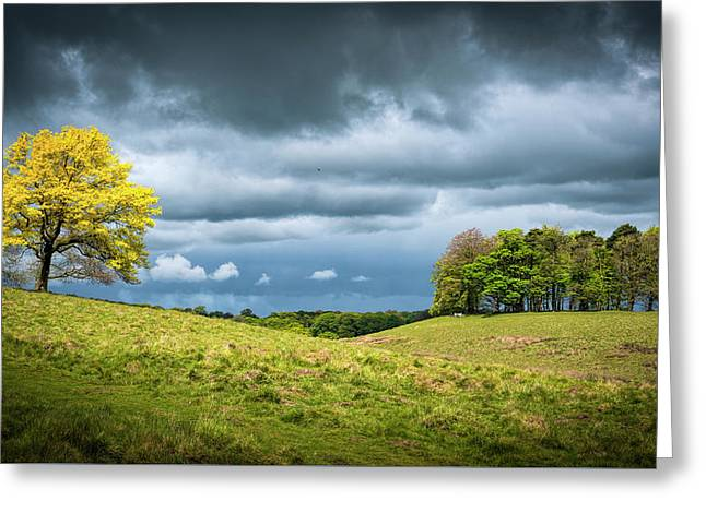 Greeting Card featuring the photograph Petworth Dark And Light by Michael Hope