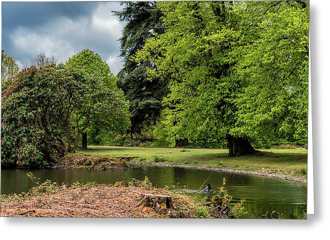 Petworth Lake With Dog Greeting Card by Michael Hope