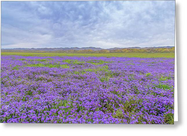 Greeting Card featuring the photograph Phacelia Field by Marc Crumpler