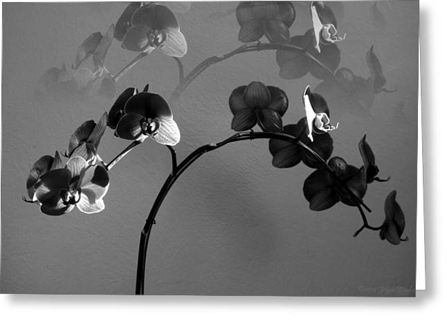 Phalaenopsis Orchcid In Black And White Refracted Greeting Card