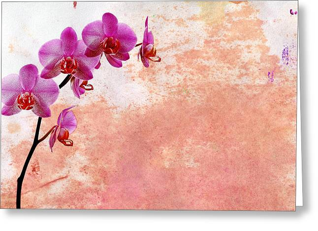 Phalaenopsis Orchid Pink Greeting Card by Mark Rogan