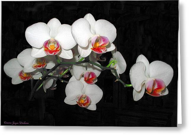 Phalaenopsis Orchids Greeting Card by Joyce Dickens