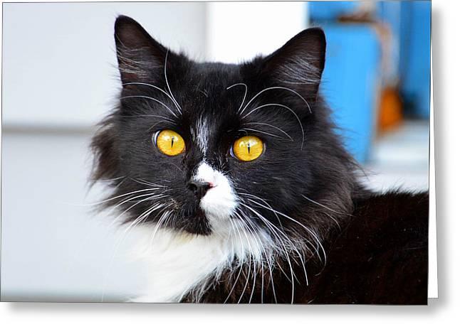 Phantom Of The Opera Cat Greeting Card by David Lee Thompson