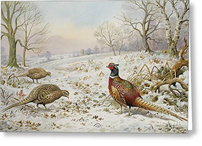 Pheasant And Partridges In A Snowy Landscape Greeting Card by Carl Donner