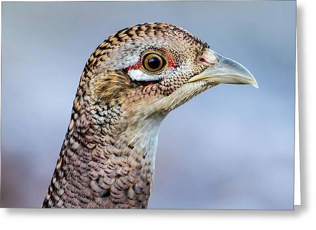 Pheasant Hen Greeting Card