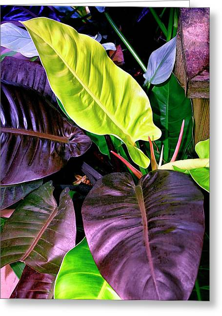 Philodendron Greeting Card by William Dey