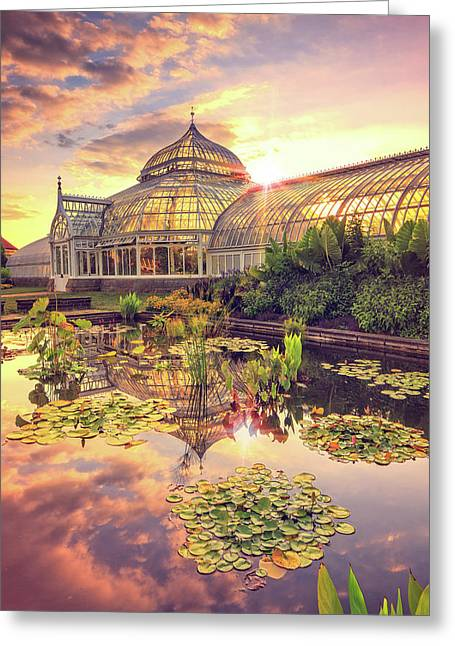 Lilys At Phipps  Greeting Card
