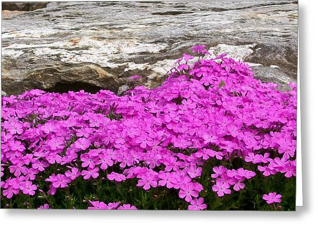 Greeting Card featuring the digital art Phlox by Barbara S Nickerson