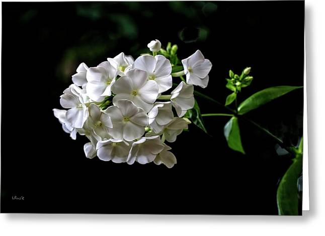 Phlox Flowers Greeting Card
