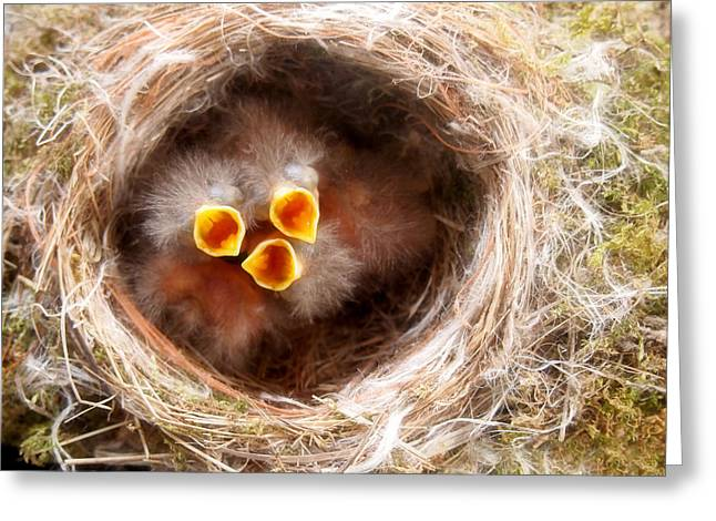 Birds In A Nest Greeting Cards - Phoebe Babies Greeting Card by Angie Rea