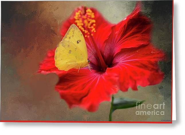 Phoebis Philea On A Hibiscus Greeting Card