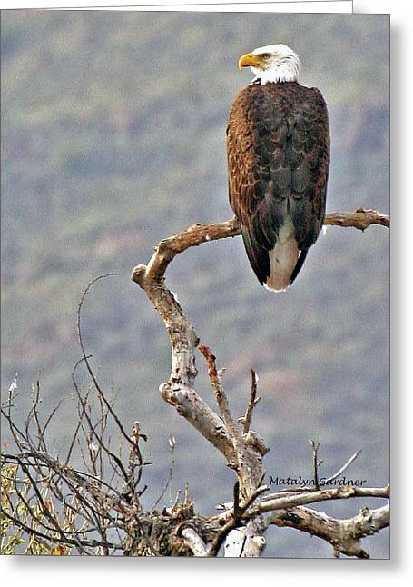 Phoenix Eagle Greeting Card