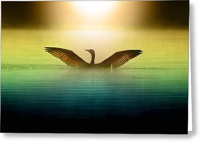 Phoenix Rising Greeting Card by Rob Blair