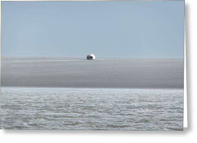 Greeting Card featuring the photograph Phoque Blanc Roulant Au Banc by Marc Philippe Joly