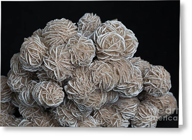 Phosphorescent Desert Rose Barite Greeting Card by Ted Kinsman