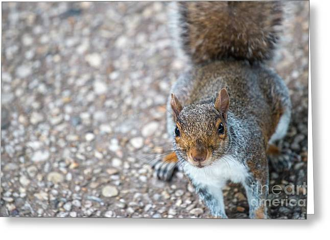 Photo Of Squirel Looking Up From The Ground Greeting Card