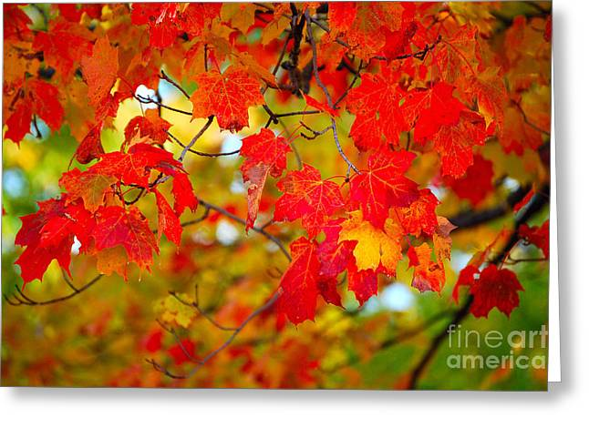 Photo Synthesis Greeting Card by Diane E Berry