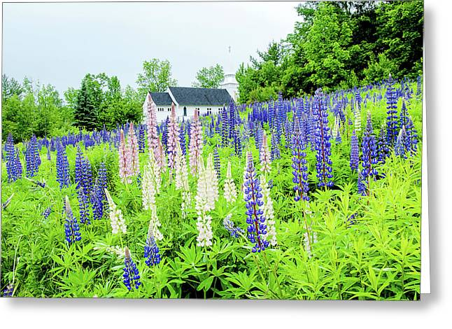 Photographers Dream Or Allergy Nightmare Greeting Card by Greg Fortier