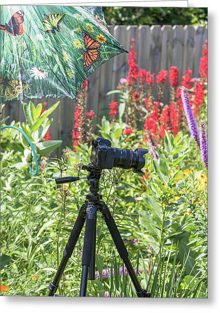 Photographing In My Garden Greeting Card