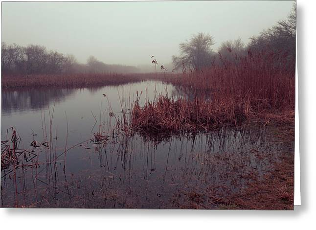 Greeting Card featuring the photograph Phragmites And Fog by Andrew Pacheco