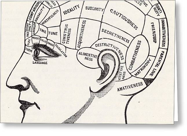 Phrenology Greeting Card by English School