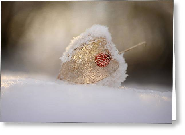 Physalis In Snow Greeting Card by Lotte Gr?nkj?r
