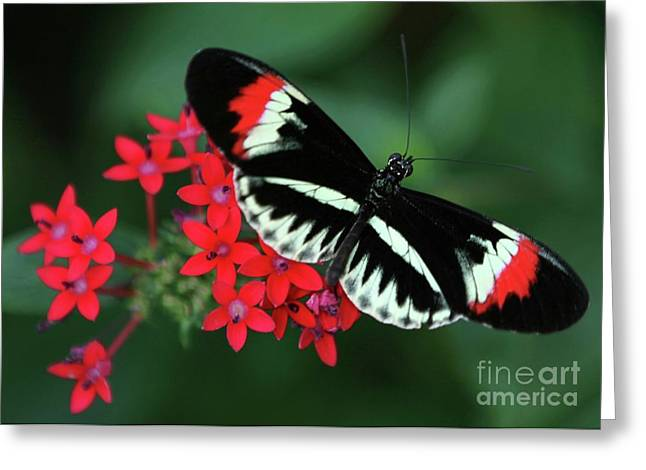 Piano Key Butterfly Greeting Card
